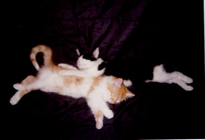 Velcro and Marmalade as kittens